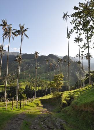 Two Travel The World - Valle de Cocora (Cocora Valley)